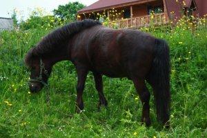 Лошадь Пасется в Конном манеже Морозовка