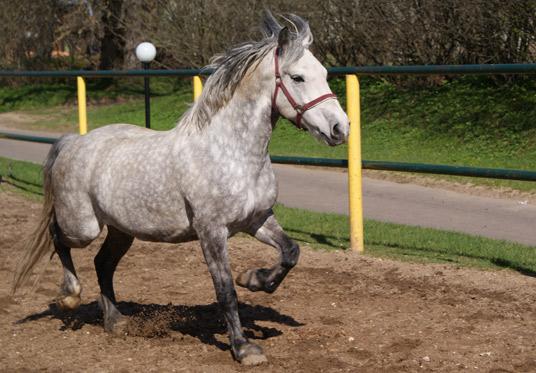 Конная прогулка на лошадях в Подмосковье