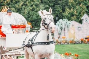 Свадебная карета с лошадью и кучером
