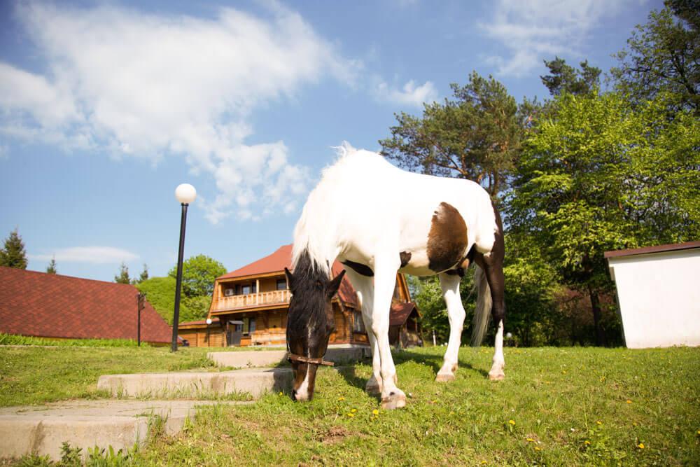 Конный комплекс в Морозовке - Лошади